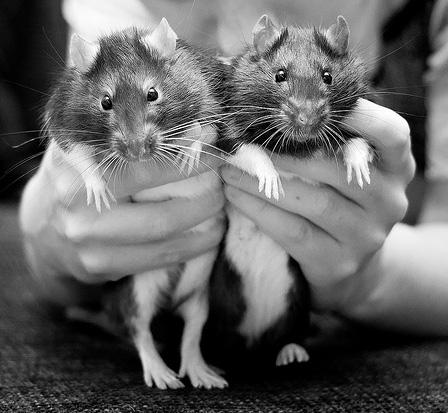 Разбор крысиных полетов